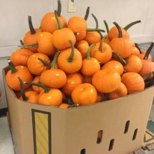 Pumpkins in NYC!