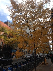 NYC is fun to enjoy outdoors in the Fall!