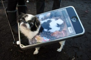 Tompkins Park dog Halloween Parade for NYC dogs to dress up!